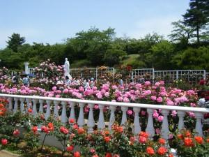 ばら苑2.jpg